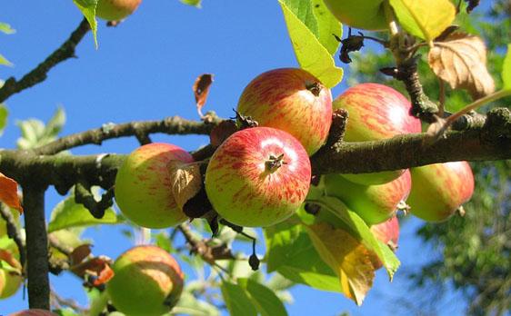 Elixo Design e i frutti